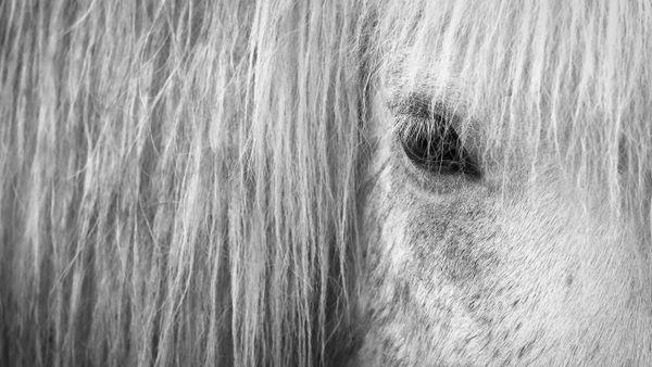 P wie Pferd