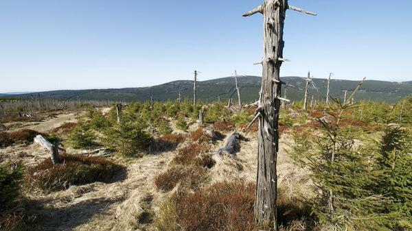 Blick auf den Brocken: Wurmberg, Harz